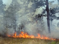 prescribed_fire_GA_DHallema.JPG