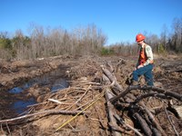 Carbon In, Carbon Out: How Tree Harvests Affect Carbon Balance in a Planted Forest