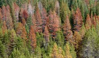 Does Salvaging Beetle-Killed Timber Make Economic Sense?