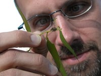 Southern Forest Insect Work Conference Elects New Chair