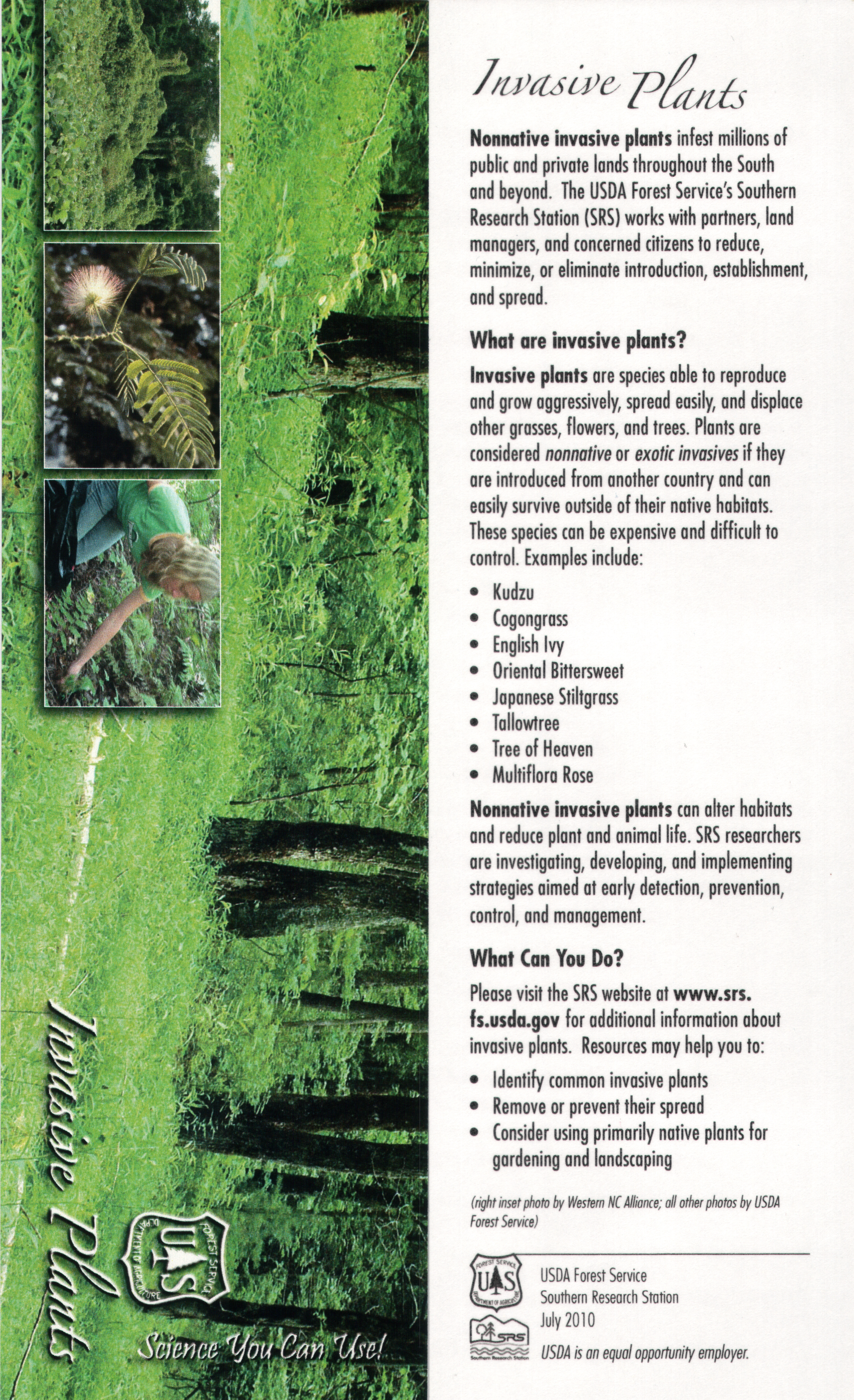 invasive plants essay