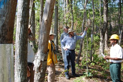 Forest Research Tour