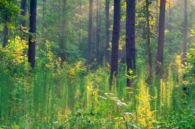 Pine-Hardwood Forest