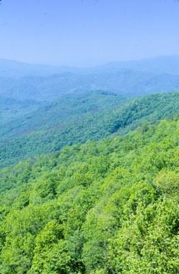 Cherokee/Nantahala National Forest