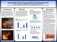 Old-growth Forest Changes After the 2003 Canoe Fire