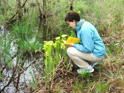 Krisha Faw monitoring pitcher plants