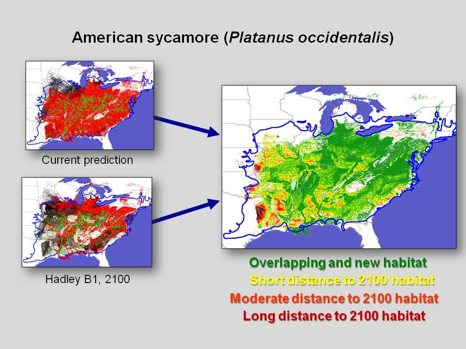 Minimum Required Movement results for American sycamore (Platanus occidentalis), depicting the distance between between currently suitable habitat and habitat predicted to be suitable in 2100 under the Hadley B1 scenario.