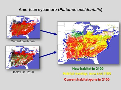 Minimum Required Movement results for American sycamore (Platanus occidentalis), depicting areas of habitat overlap and non-overlap between currently suitable habitat and habitat predicted to be suitable in 2100 under the Hadley B1 scenario.