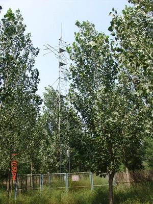 poplar plantation.jpg