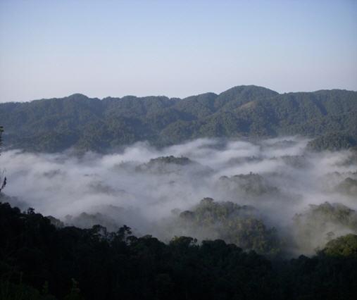 Rwanda national park.jpg