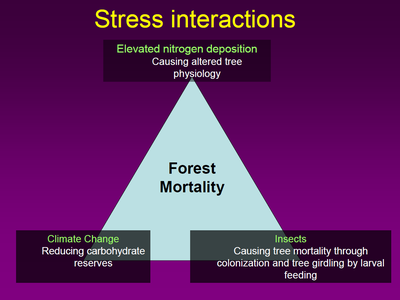 Stress interactions